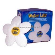 Water Lily - existe en boîte de 6 et présentoir de 36 boîtes